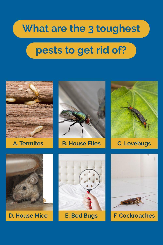 Pin On Common Florida Pests
