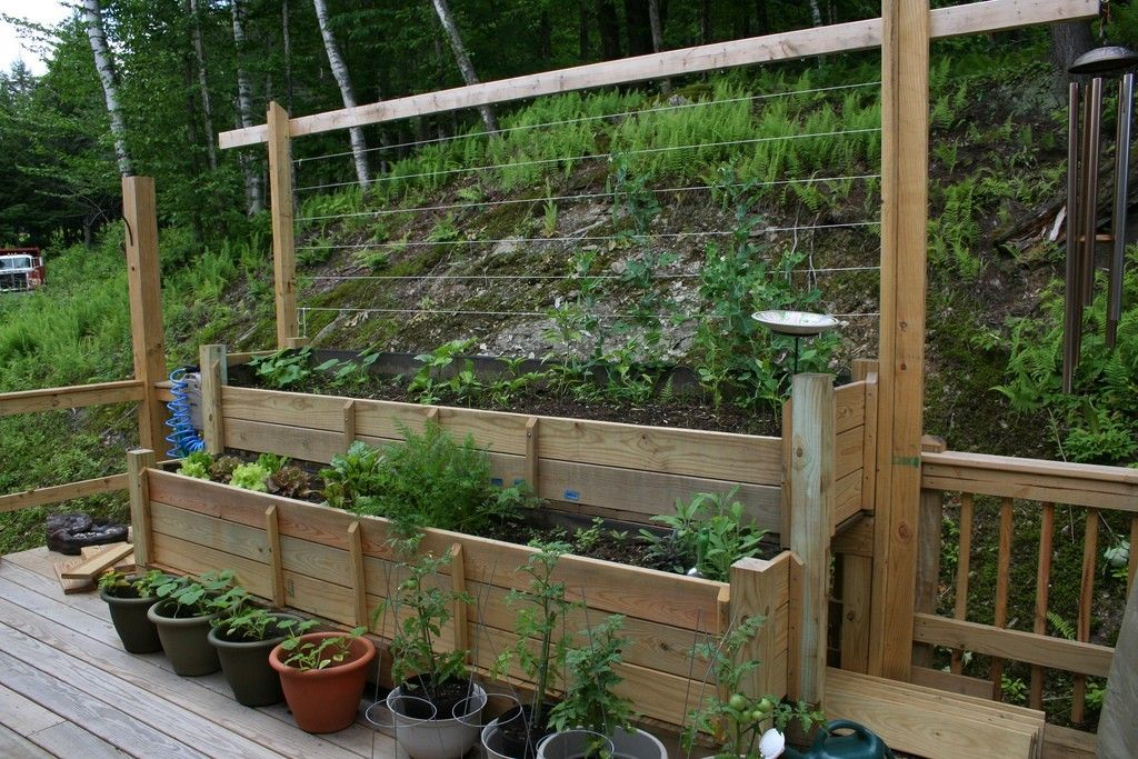 Raising Vegetables On Decks How To Grow Vegetables On Your Deck