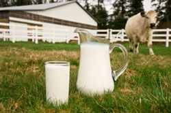 How much land do we need for a milk cow?