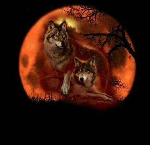 6a36fa9afd Pin by Teresa Fisher on Pretty Pictures   Wolf, Wolf t shirt, Purple ...