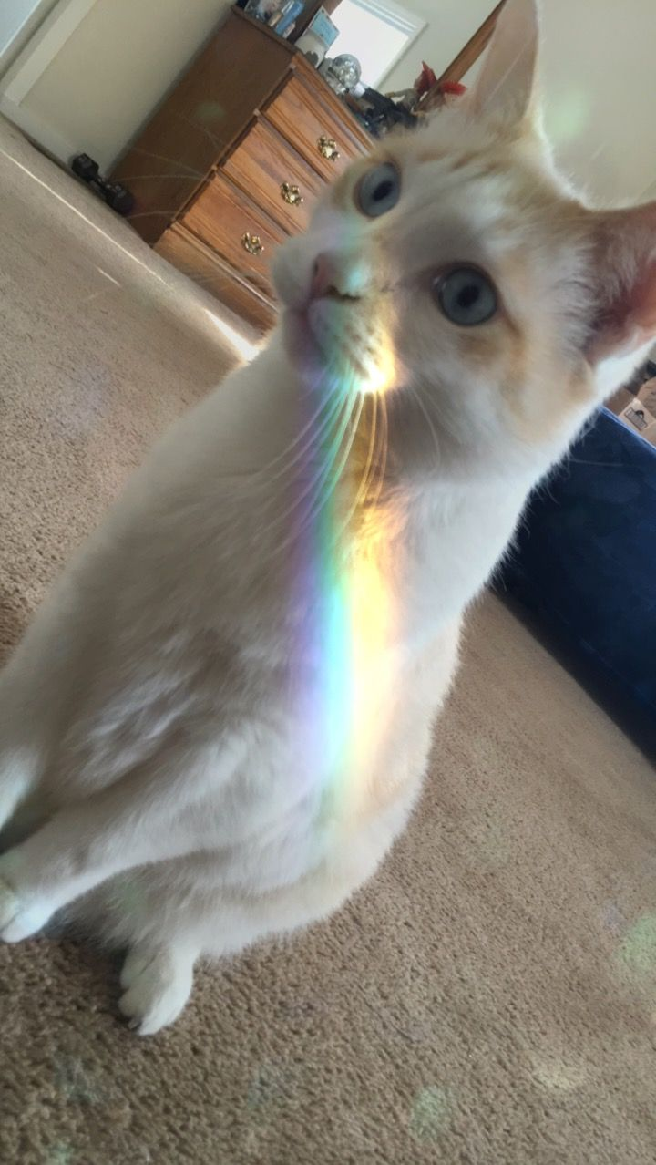 Aesthetic of my cat with a rainbow ) Gatinhos fofos