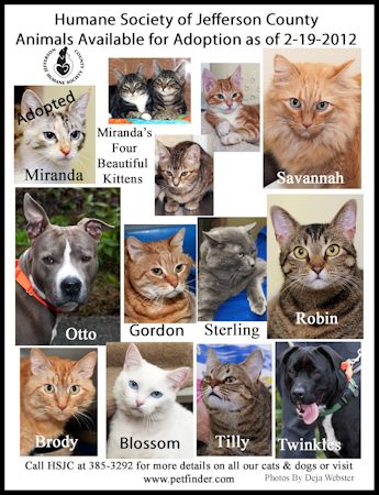This Weeks Adoption Flyer Already This Week Two Of Miranda S Kittens Were Adopted The 2 Tabby Kittens Are Still Looking T Tabby Kitten Humane Society Kittens