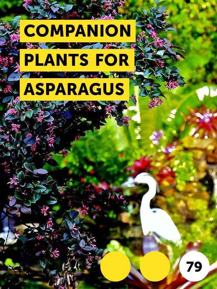 Companion Plants For Asparagus Dwarf Mondo Grass Plants 400 x 300