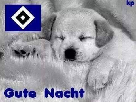 Sign In Babyhunde Niedliche Welpen Welpenbilder