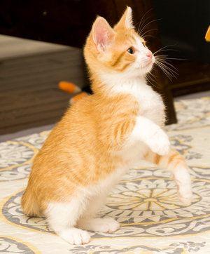 Charlie Kitten Academy Charweemonster Twitter Dsc9311 Jpg