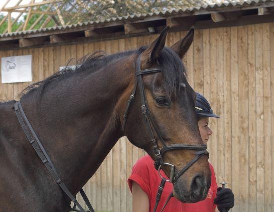 Courtesy KNOE Horses Pinterest Horse - horse lease agreements
