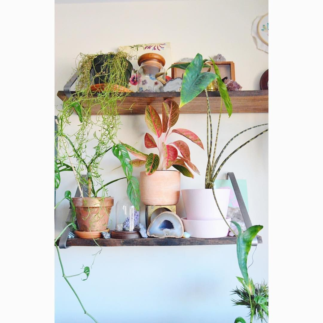 likes comments apartment botanist apartmentbotanist on
