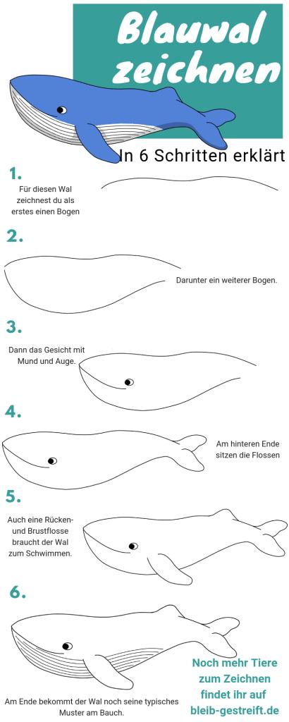 Anleitung Zum Wale Zeichnen Zeichne Einen Blauwal Wale Blauwal Zeichnen Anleitung