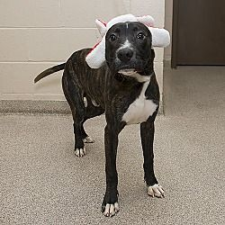 Pictures Of Slim A Mixed Breed Small For Adoption In Troy Oh