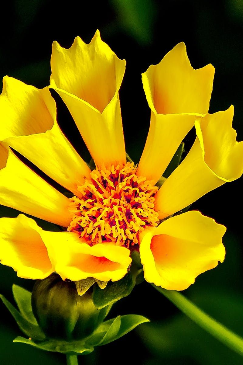 Yellow Flower In Macro Lens Photography Beauts Florales
