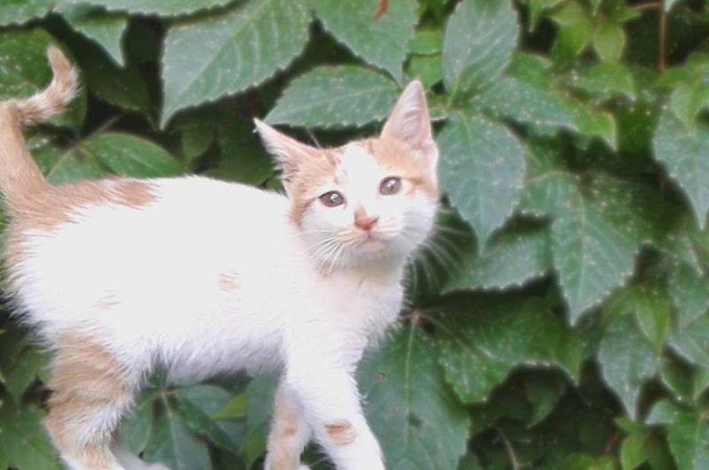 مرحبا من سراقب ادلب سوريا قطط Cats Hello From Saraqeb Idlib Syria Cats Animals City