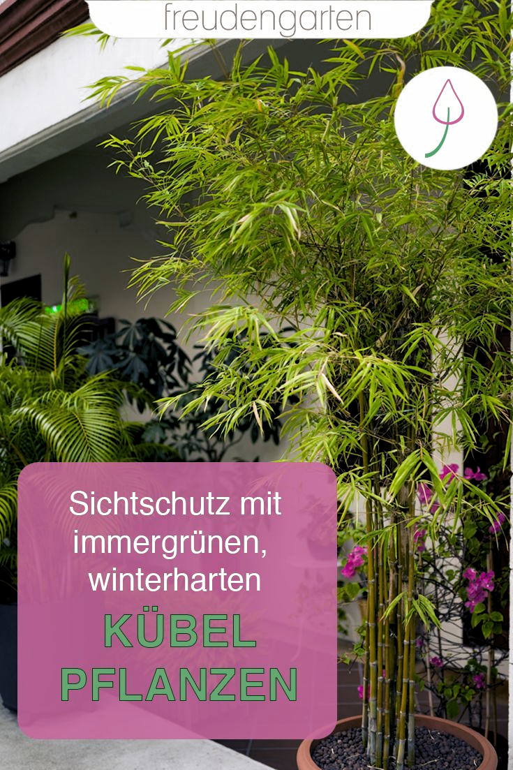 Winterhart Sichtschutz Garten Pflanzen