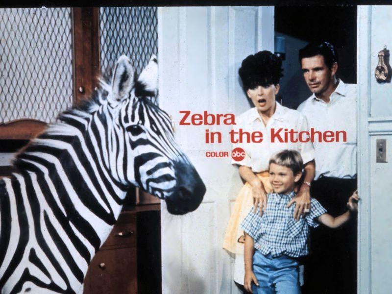 Zebra In The Kitchen Zebra Zebras Kitchen Color