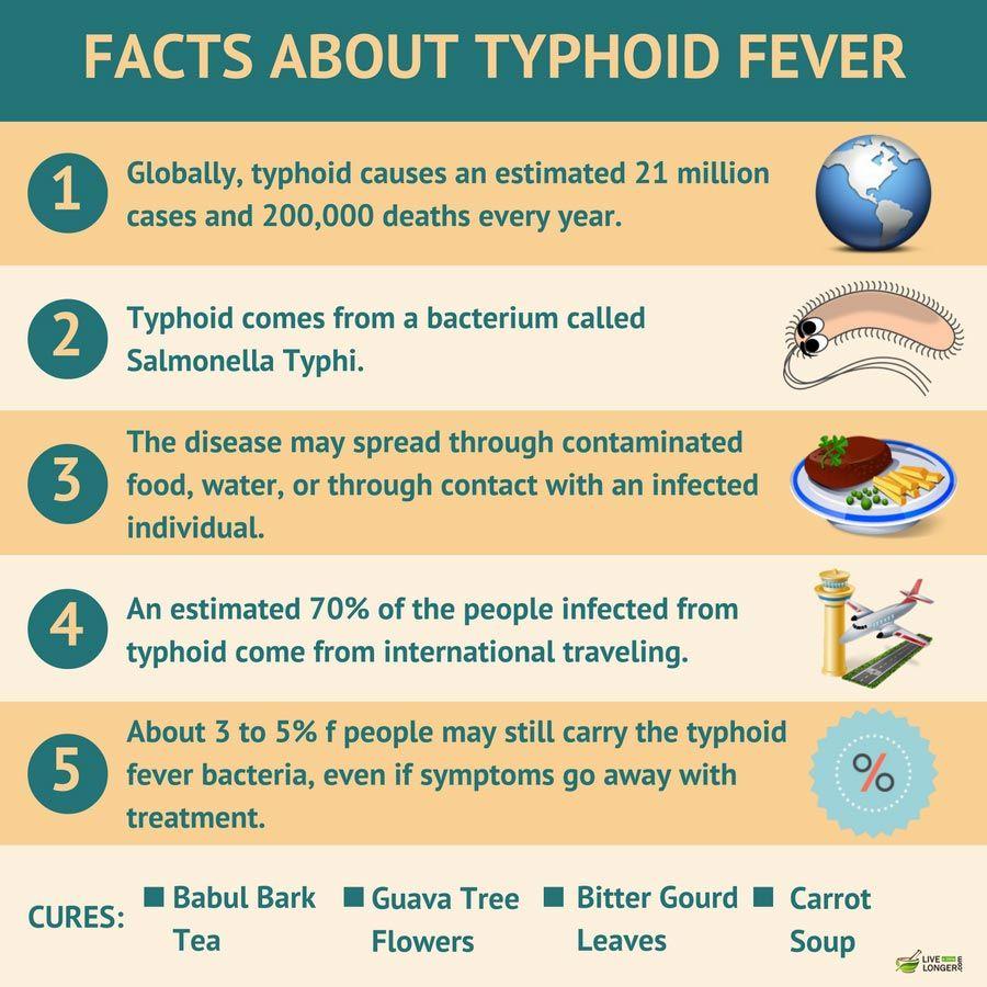 Typhoid fever: causes, symptoms, treatment 94
