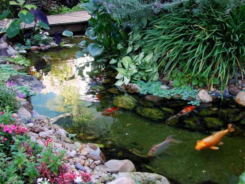 Lagos ornamentais elale havuz pinterest lagos for Estanque de carpas