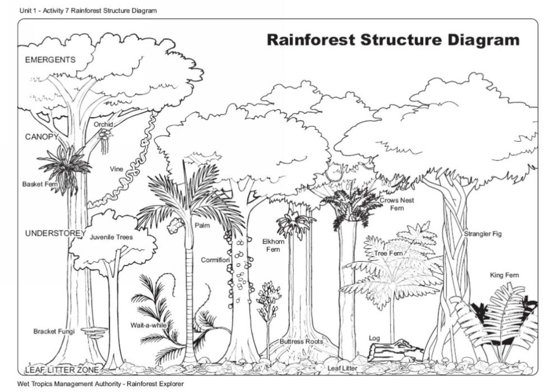 Rainforest Structure Diagram Photographer Wtma
