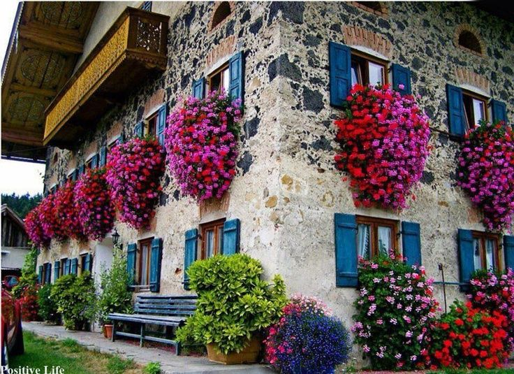 Swiss House Geraniums Switzerland They Know How To Grow Geraniums What Do They Feed Window Box Balcony Garden Window Boxes