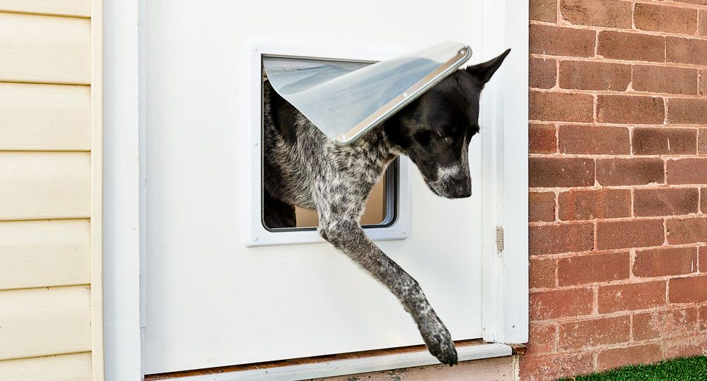How To Make A Doggie Door   Better Homes And Gardens