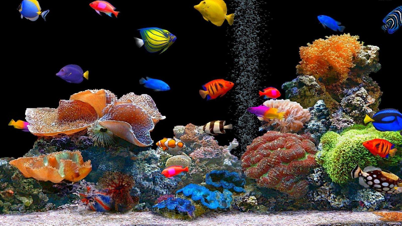 Peces de colores hd 1600x900 imagenes wallpapers for Buscar fondo de pantallas gratis
