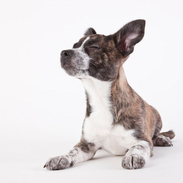 Portraits of Shelter Puppies