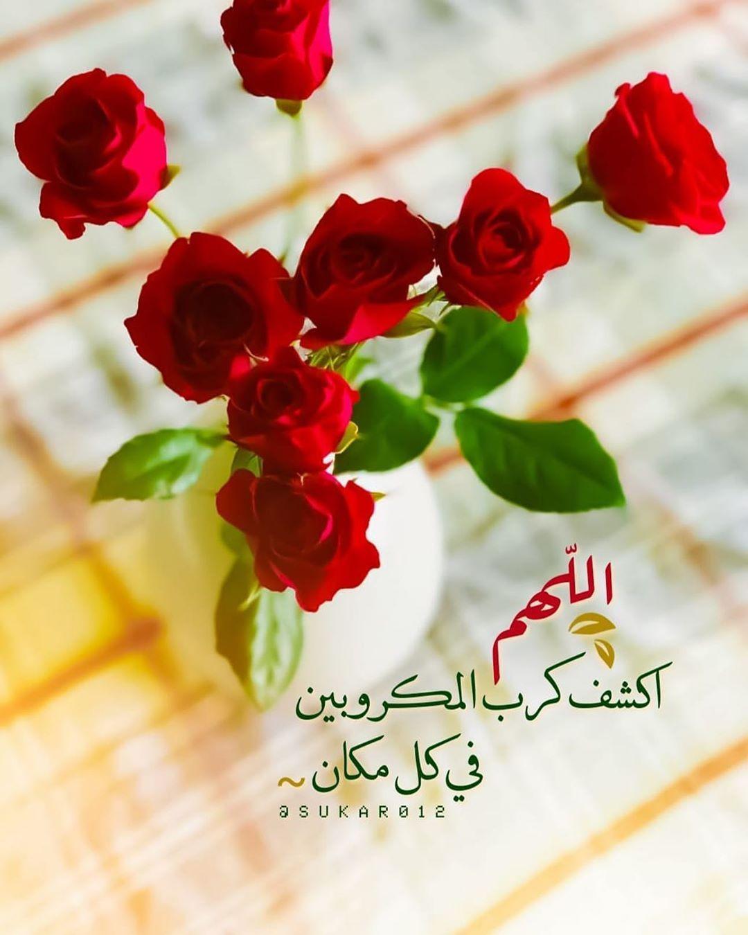 315 Likes 6 Comments عـ زه الزهـ ـراني Azazy7 On Instagram Flowers Rose Plants