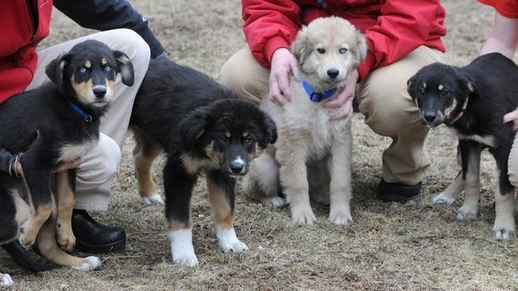 Rescued Puppies Arrive On Cape Cod Nineteen Puppies Arrived At
