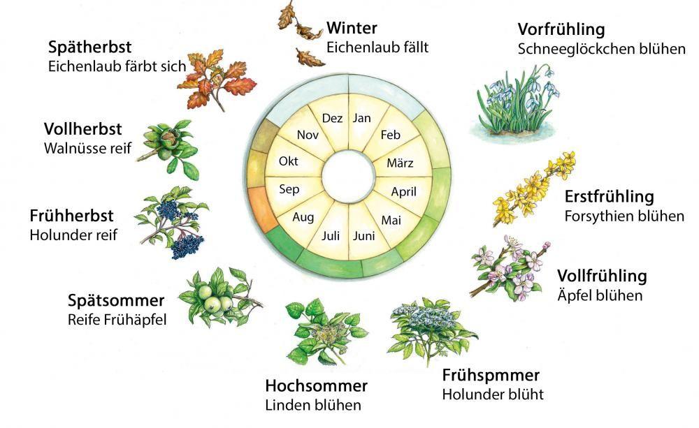 Der Phanologische Kalender Gartnern Gartenarbeit Bepflanzung
