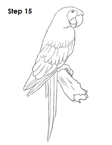 Scarlet Macaw Drawing 15 In 2020 Macaw Art Parrots Art Parrot Drawing