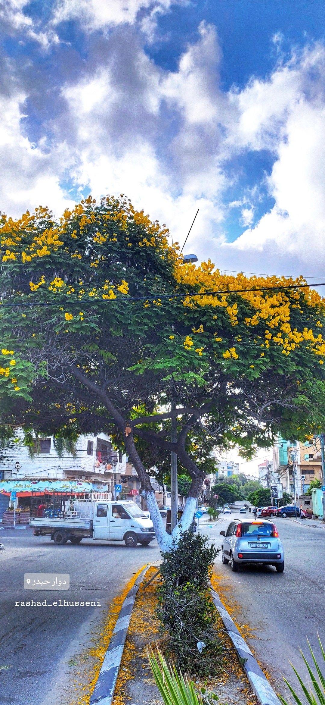 صباح الورد اصفر Flowers Road Structures