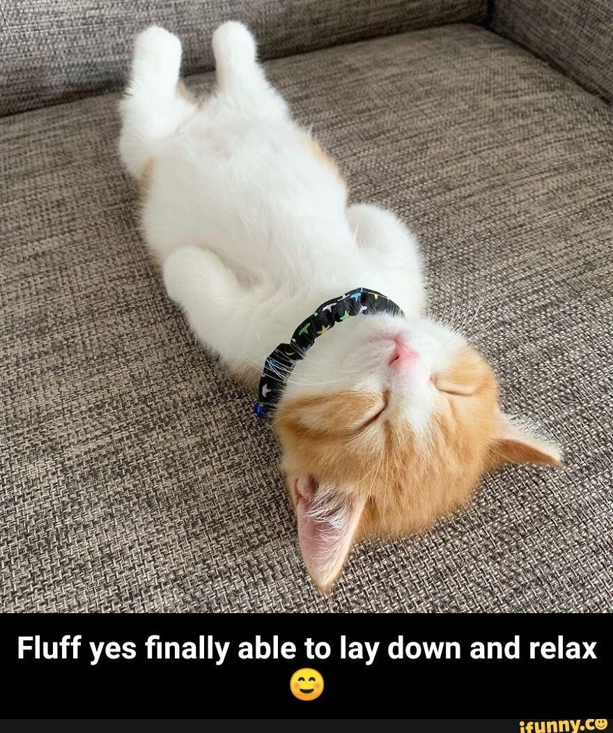 Aldi Fiancee S Cat Likes To Lay Down Upside Down Aldi Meme On Me Me
