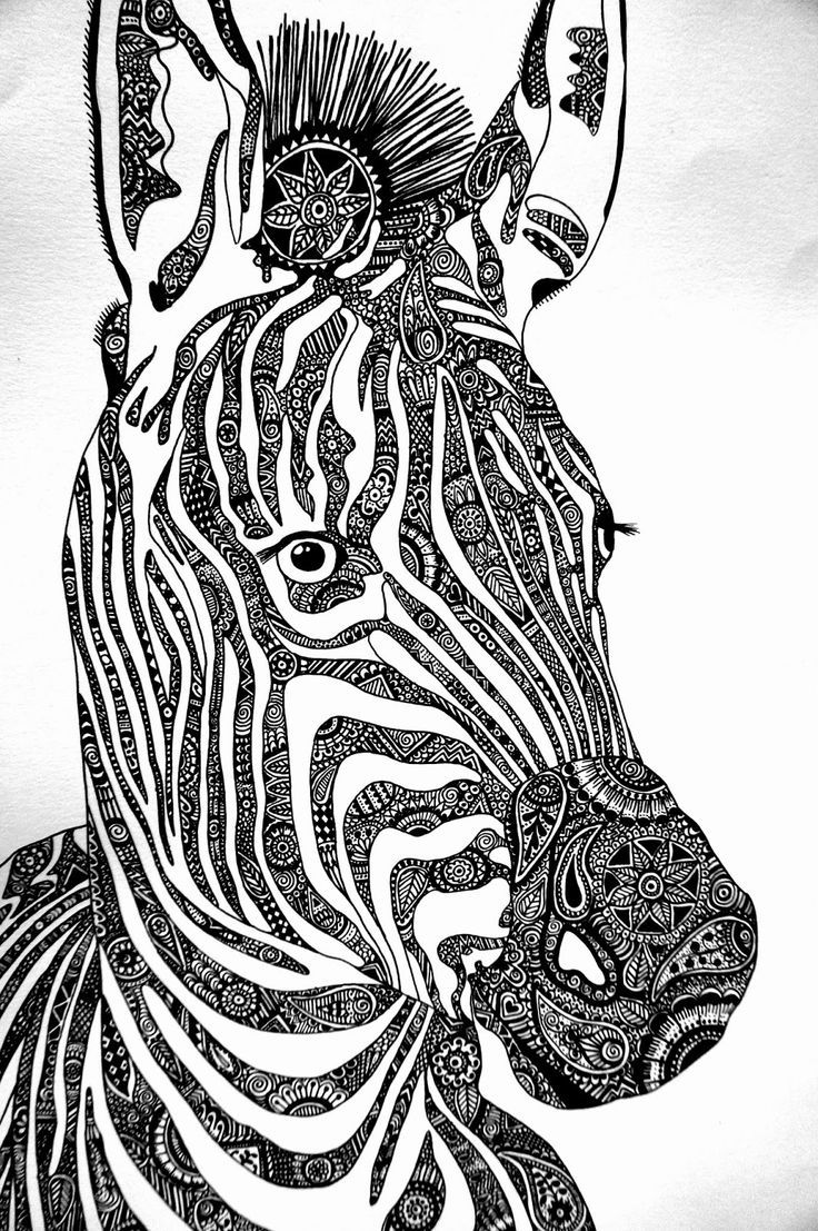 Colouring sheets zebra - 1000 Images About Animal Art On Pinterest Zentangle Giraffes And Zebras