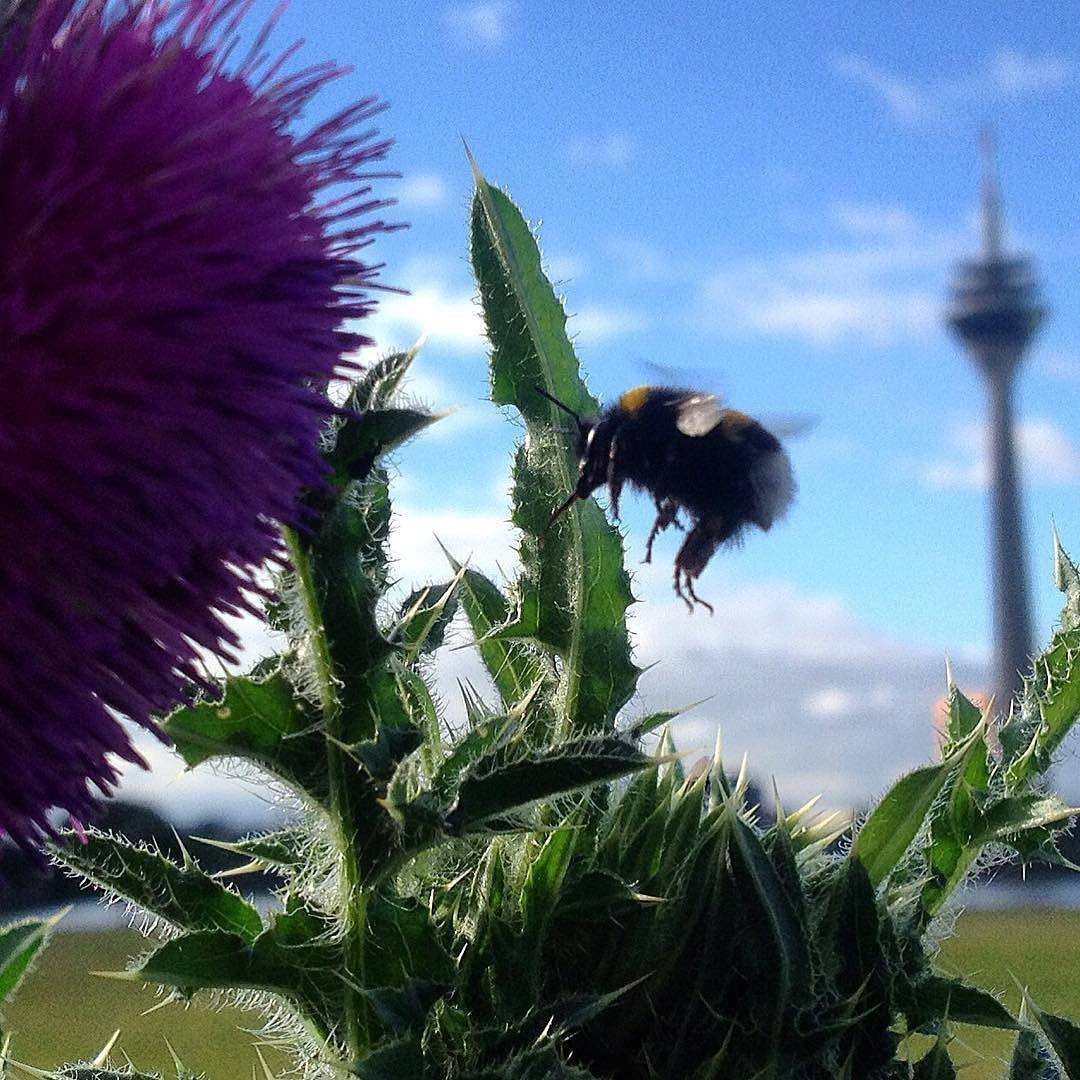 Sie befinden sich im Landeanflug - bitte stellen Sie die Flügel gerade... #duesseldorf #bilk #urban