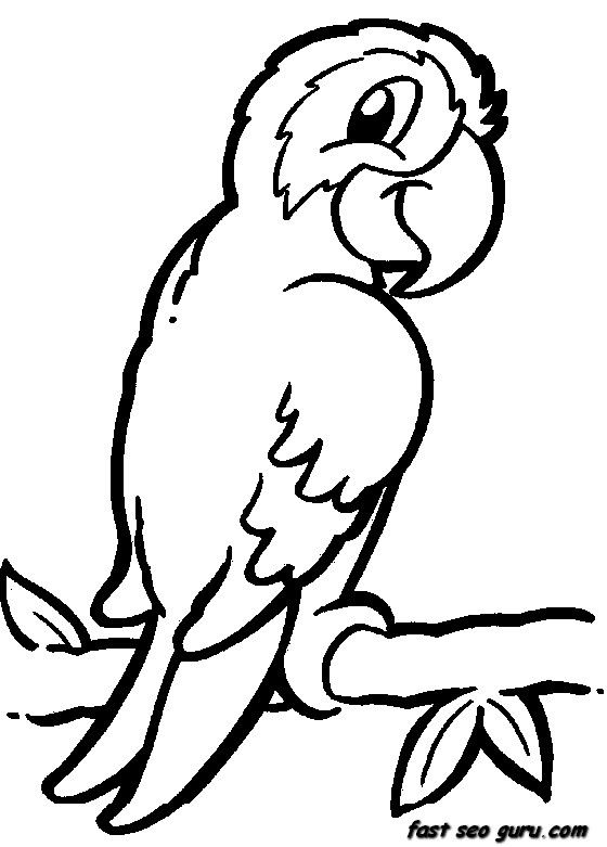 Jungle Bird Parrot Coloring Pages Printable For Kids Zoo Animal Coloring Pages Jungle Coloring Pages Animal Coloring Pages