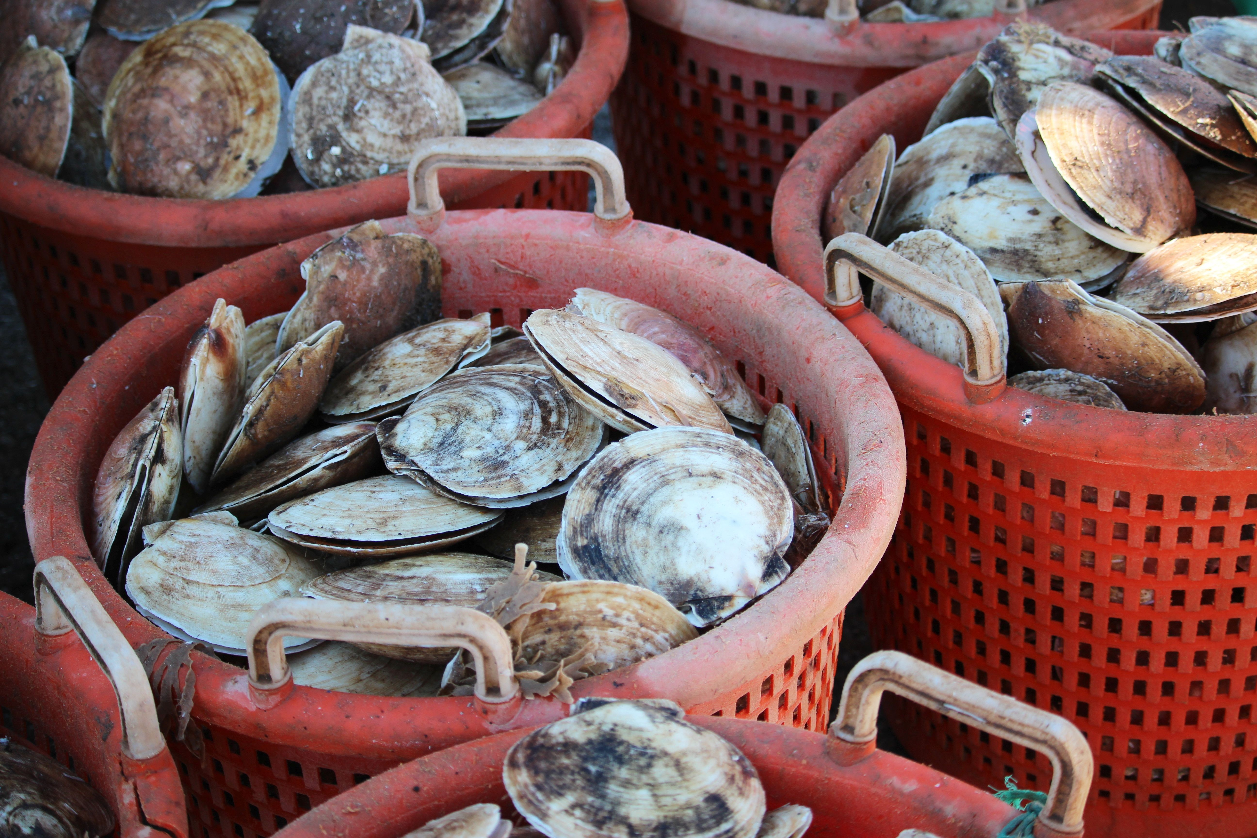 a seafood plant is working with ibm to track the provenance of fresh scallops using blockchain technology the ra food tracking fresh scallops seafood market a seafood plant is working with ibm to track the provenance of fresh scallops using blockchain technology the ra food tracking fresh scallops seafood market