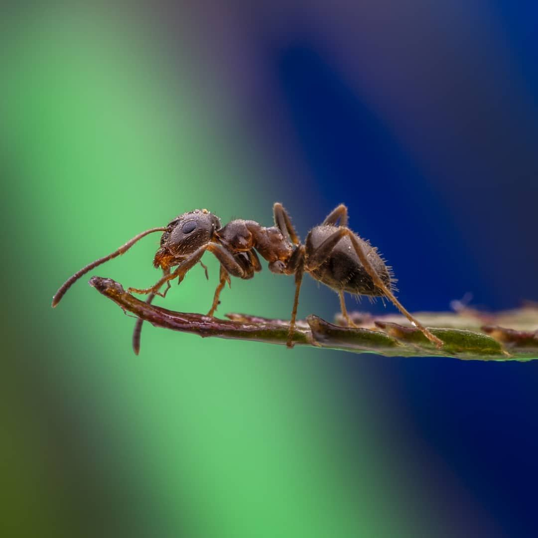 """Marc Lie on Instagram: """"Just one Ant.  #macrophotography #insect #naturephotography #photographersofig #macroworld_tr #macrophotography #insectogramme #nature…"""""""