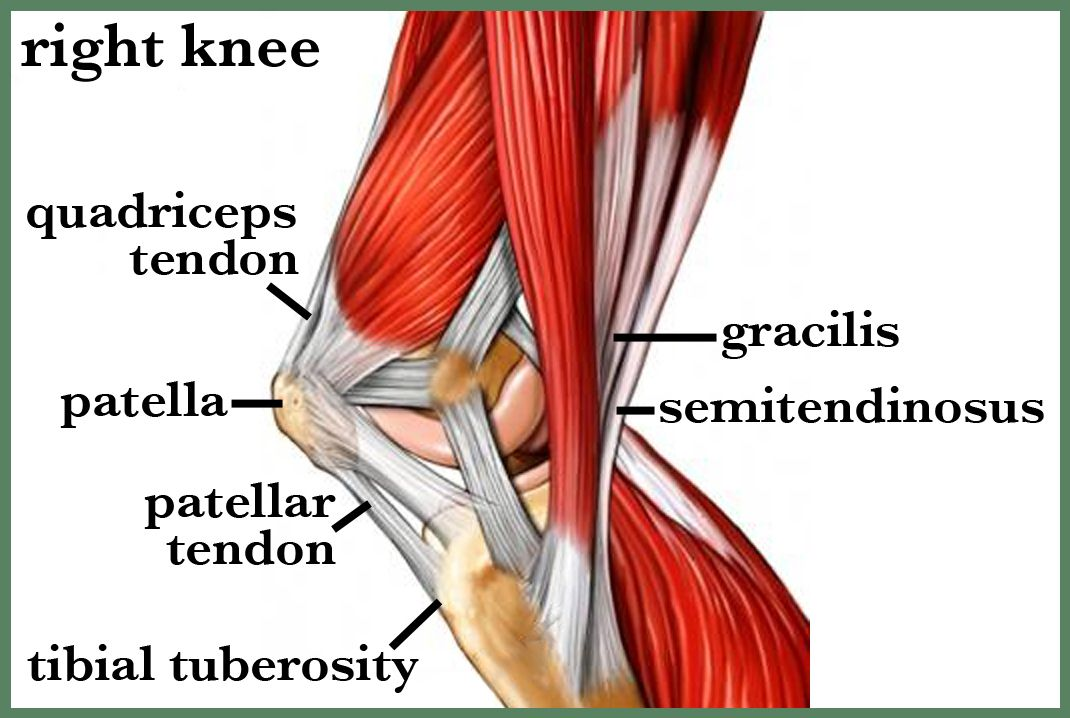 Images Fascia Patella Google Search Knee Anatomy Pinterest