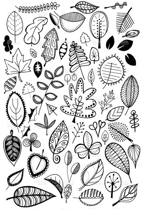 Hand drawn vector doodle leaves, quirky and fun nature clip art ...