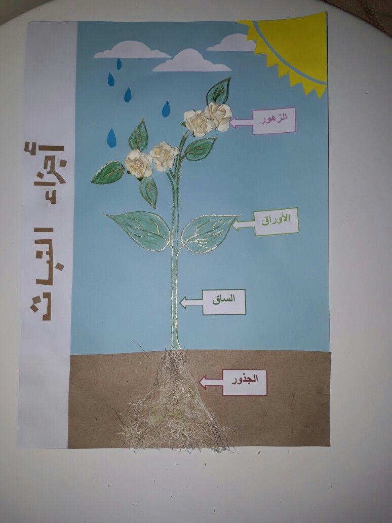 اجزاء النبات الصف الاول ابتدائي ماده العلوم Witchy Wallpaper Wallpaper Witchy