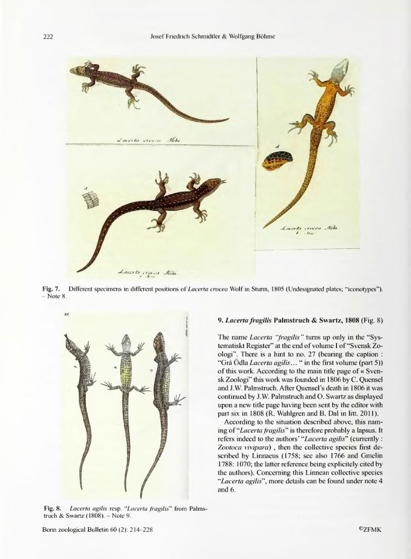Synonymy and nomenclatural history of the Common or Viviparous Lizard, by this time: Zootaca vivipara (Lichtenstein, 1823) - BioStor