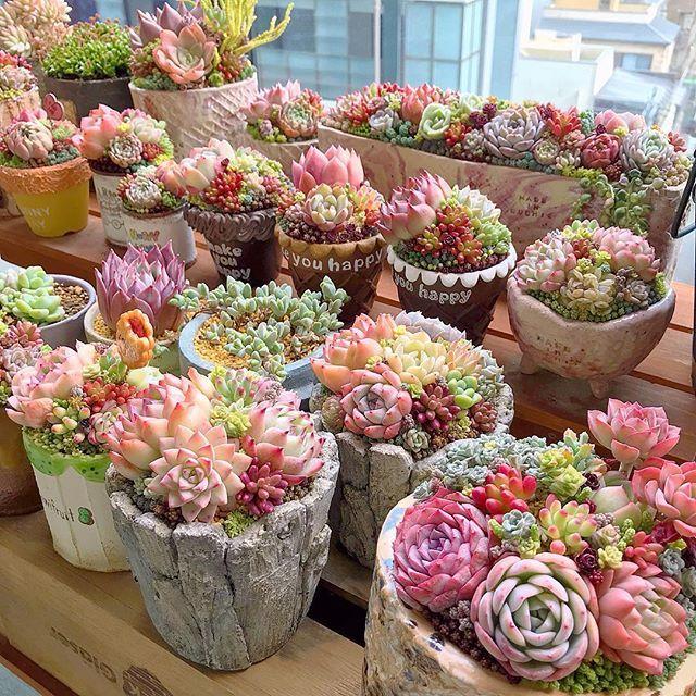 Heaven Avec Images Plante Succulente Succulentes