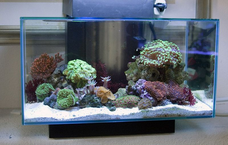 25 Nanoriff Aquarium Ideen Meerwasser Aquarium Aquarium Meerwasser