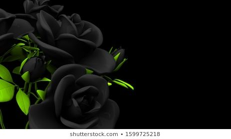 Black roses bouquet on black text space3D render illustration illustration material background rose space arrangement space