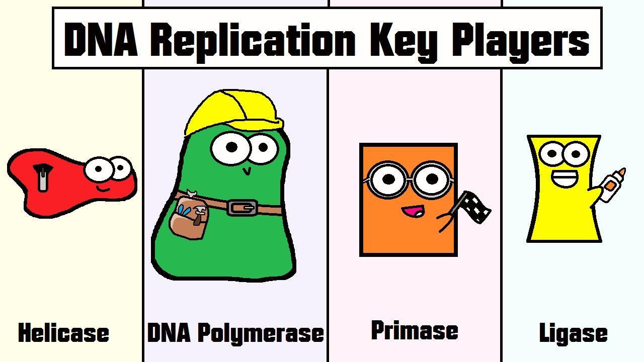Dna Replication Coloring Worksheet Key Biology Classroom Science Biology Teaching Biology [ 720 x 1280 Pixel ]