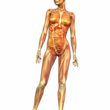 The Number One Human Anatomy and Physiology Course Learn About The ...