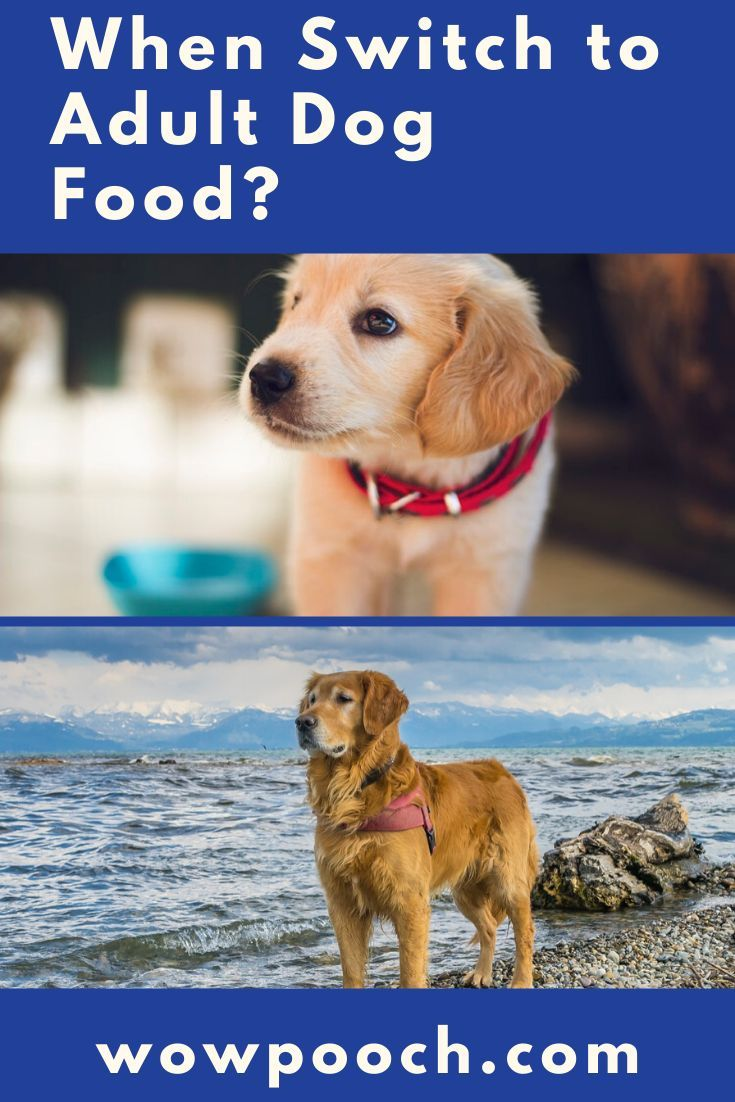 Is Your Puppy Ready For Adult Dog Food Are You Trying To