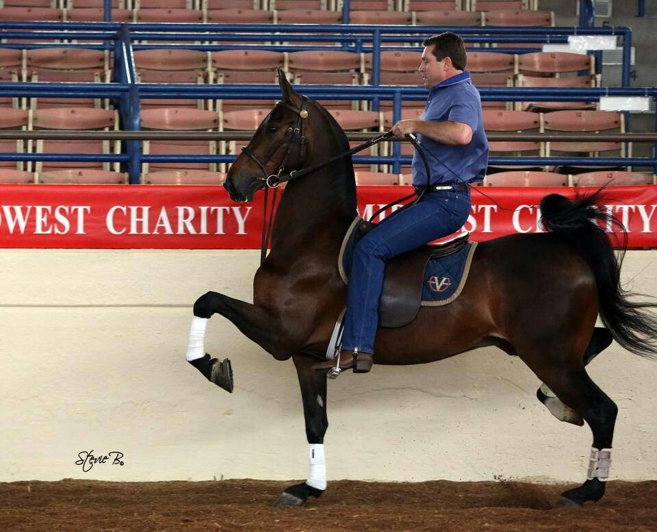 These saddle seat riders man, they've got some *special* eq