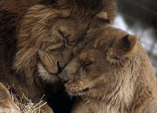 Photo of Bon moment pour le lit maintenant, je t'aime, bonne nuit ❤ xxxxx