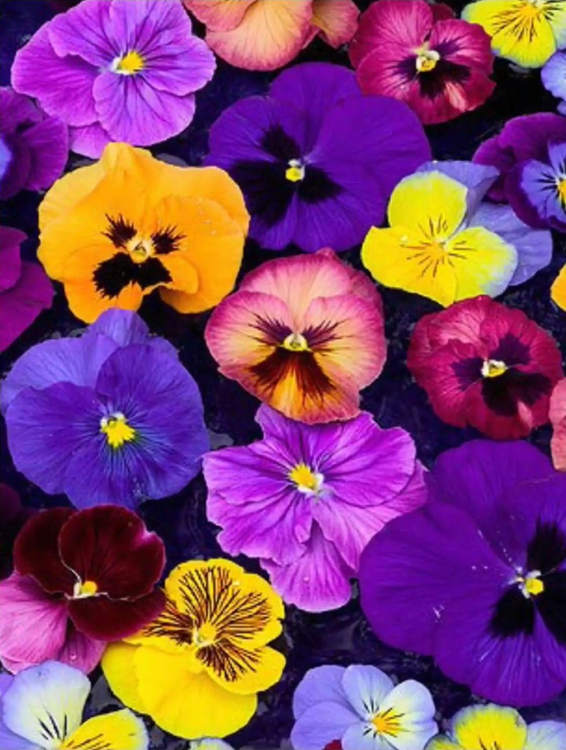 Pansies Pansies Flowers Flower Garden Plants