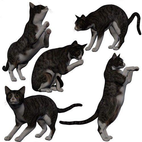 Cat poses 4   Кошки