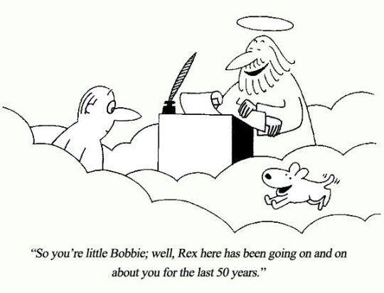 C Est Vous Ti Bob Rex Viens Vous Rejoindre Il Parle De Vous Depuis 50 Ans Dog Heaven I Love Dogs Rex